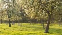 Bloeiende fruitbomen.