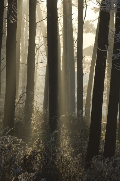 Bos in de winter.