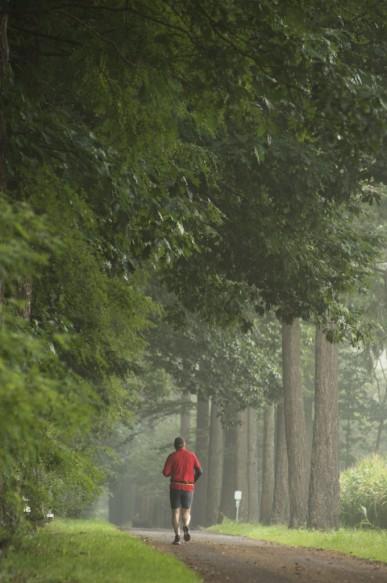 Joggen in het bos.