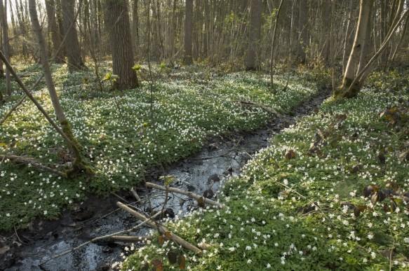 Bos met lenteflora.