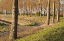 Scheurhoekdijk