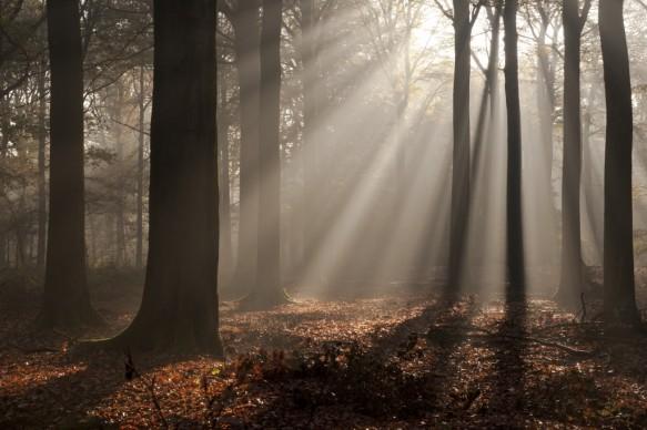 Sfeer in het bos.