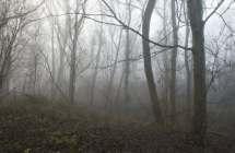 Vinderhoutse bossen