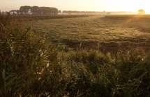Poldergrasland.
