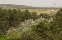 Boswachterij Westenschouwen