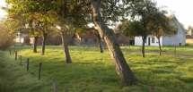 Hoogstamboomgaard.