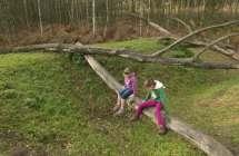 Spelende kinderen in het bos.