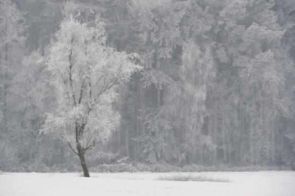 Berk in de winter.