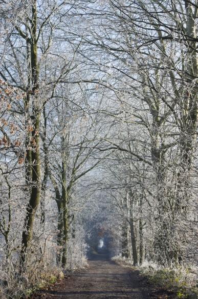 Bosdreef in de winter