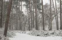 Lembeekse bossen in de sneeuw.