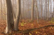 Bos in het Maldegemveld.