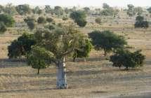 Savanne te Senegal
