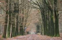 Antwerpse Heirweg.
