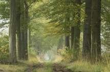 Dreef in het bos.