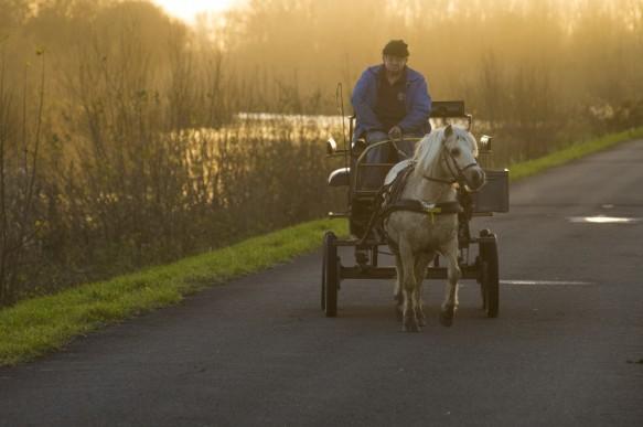 Paard en kar langs de Schelde.