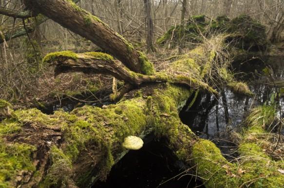 Dood hout in het bos