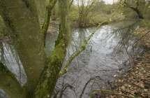 Omgeving van de bron van de Schelde.