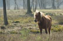 Pony in het Stropersbos