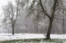Hoogstamboomgaard in de winter