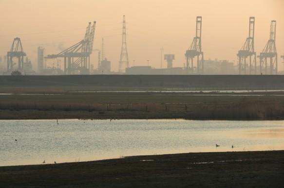 Natuur in de Waaslandhaven.