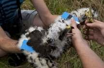 Onderzoek op Bruine kiekendief