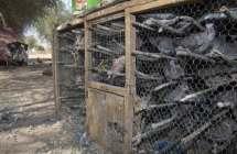 Gevangen duiven